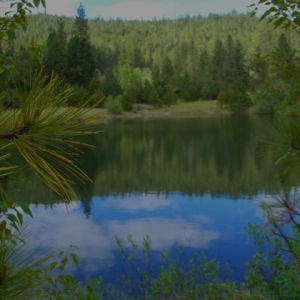 Wild-Goose-Lake-from-the-Pinegrove