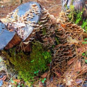 Barnacle-Stump